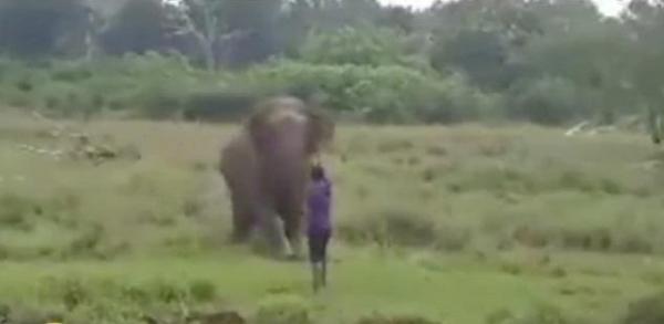 مشهد يحبس الأنفاس.. فيل ضخم يدهس راعيا سيريلانكيا حتى الموت (فيديو + 18)