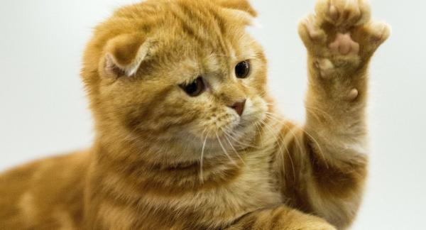 بالفيديو.. قصة القطة التي حصدت ملايين المشاهدات.. تهاجم الرجال والحيوانات ولا تهاجم النساء والأطفال