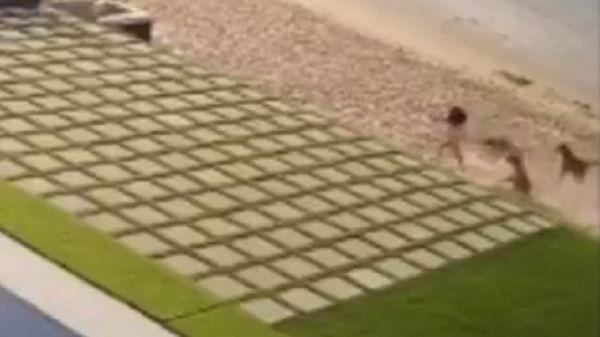 شاهد.. كلاب ضالة تهاجم طفلة أمام أحد شاليهات الخيران بالكويت (فيديو)