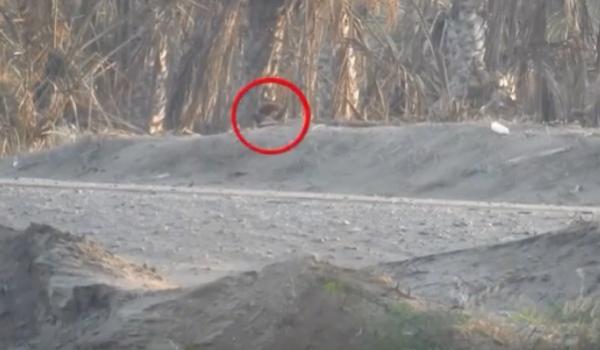 بدقيقتين.. فيديو يكشف بداية المعركة من أولها إلى آخرها في الفازة بالحديدة .. شاهد كيف انتهت