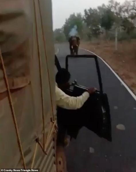 فيديو المواجهة.. شاهد كيف أطفأ فيل غضبَه في شاحنة وركّابها