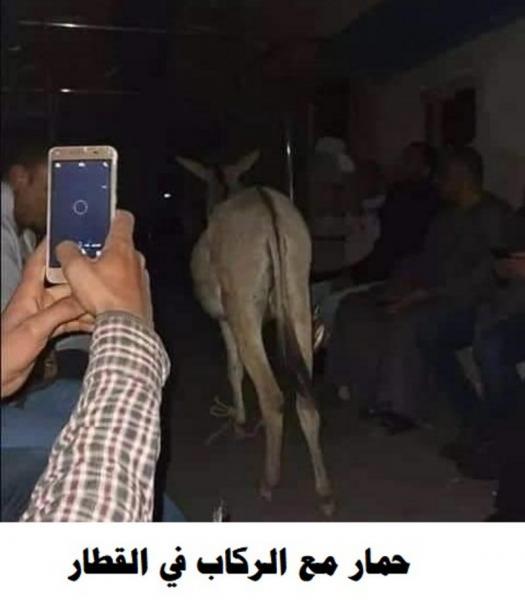 تعرف على الحمار الذي أذهل المصريين فالتقطوا العديد من الصور له