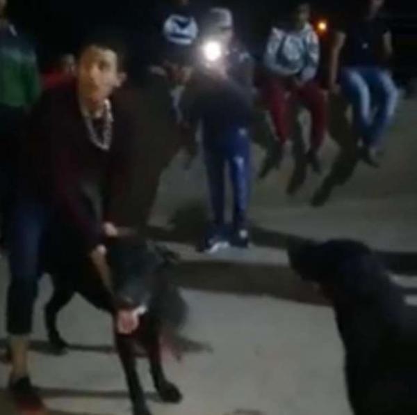 """مصر: القبض على المتهمين في واقعة """"فيديو مصارعة الكلاب"""""""