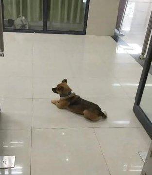 كلب يرفض مغادرة المستشفى بعدما توفي صاحبه فيه