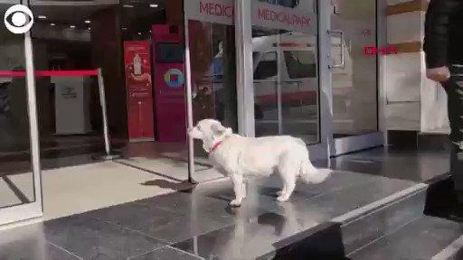 بالفيديو.. قصة الكلبة التي انتظرت اياماً خارج المستشفى