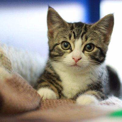 تطبيق جديد يترجم أصوات القطط إلى كلمات يفهمها البشر